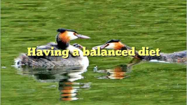 Having a balanced diet