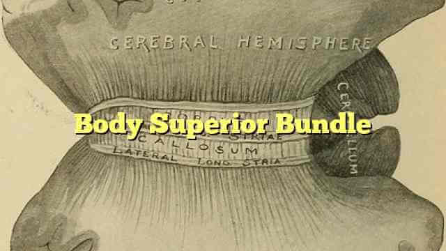 Body Superior Bundle