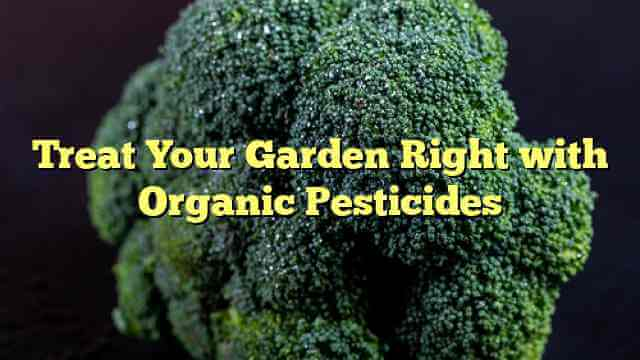 Treat Your Garden Right with Organic Pesticides